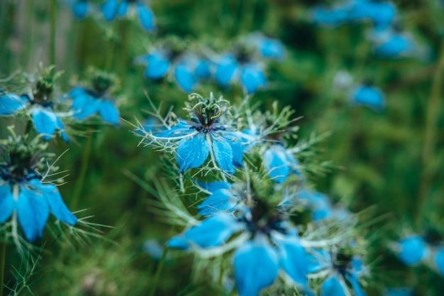 Un giovane fiore blu all'interno di un fiore più grande e con la luce che entra tra i tuoi fiori. profondità di campo estremamente ridotta per un'atmosfera da sogno.