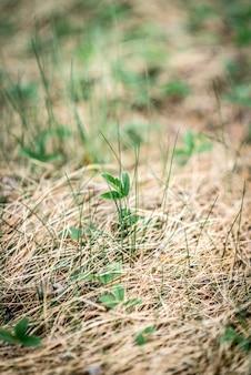 Giovani rami di una betulla nella foresta