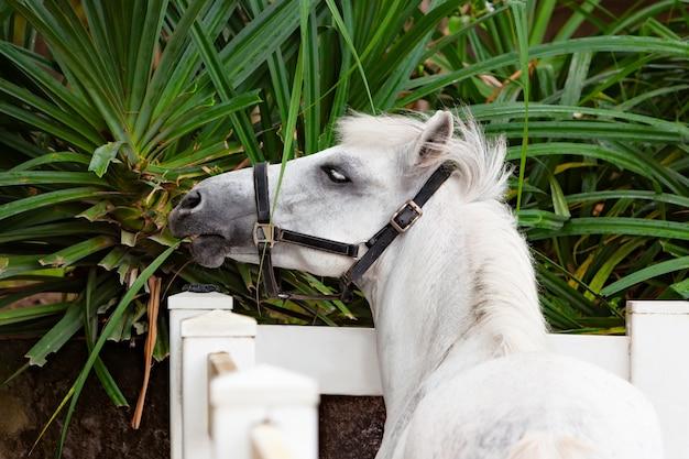 Il giovane cavallo di colore marrone si diverte, raggiungendo attraverso la recinzione per mangiare i fiori dall'aiuola verde.