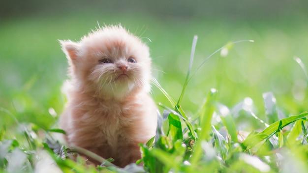 Giovane gatto sul prato verde con luce posteriore