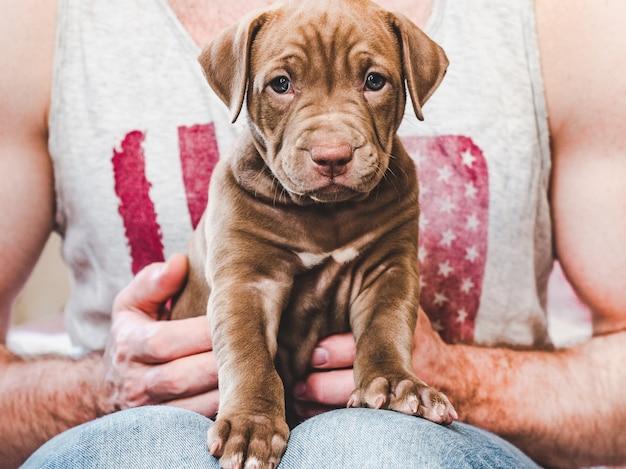 Cucciolo giovane e affascinante nelle mani di un proprietario premuroso. close-up, sfondo bianco isolato. foto dello studio. concetto di cura, educazione, formazione e allevamento di animali