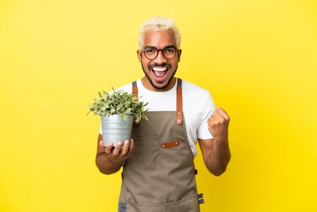 Giovane uomo colombiano che tiene una pianta isolata su sfondo giallo che celebra una vittoria nella posizione del vincitore