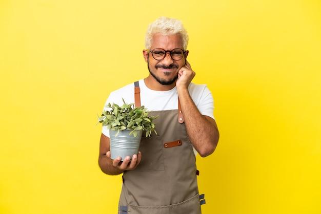 Giovane uomo colombiano in possesso di una pianta isolata su sfondo giallo frustrato e che copre le orecchie