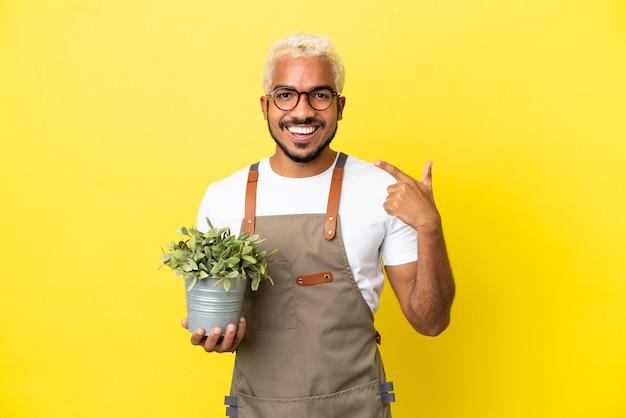 Giovane uomo colombiano che tiene una pianta isolata su sfondo giallo che fa un gesto di pollice in alto