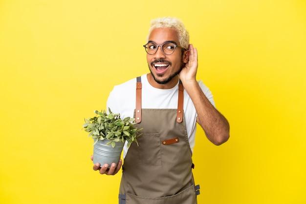 Giovane uomo colombiano che tiene una pianta isolata su sfondo giallo ascoltando qualcosa mettendo la mano sull'orecchio
