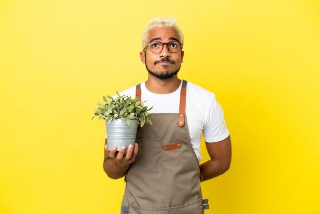 Giovane uomo colombiano in possesso di una pianta isolata su sfondo giallo e guardando in alto