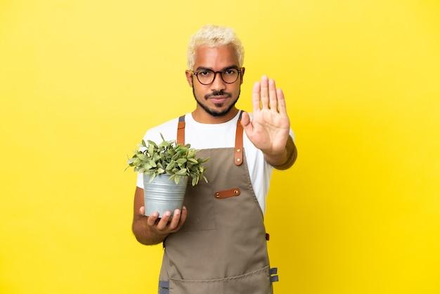 Giovane uomo colombiano in possesso di una pianta isolata su sfondo giallo che fa un gesto di arresto