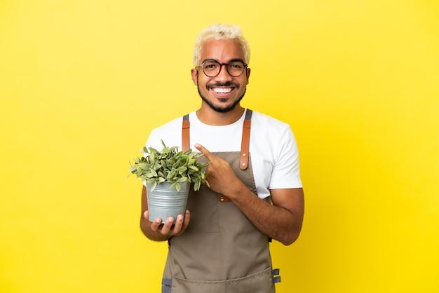 Giovane uomo colombiano che tiene una pianta isolata su sfondo giallo che punta al lato per presentare un prodotto