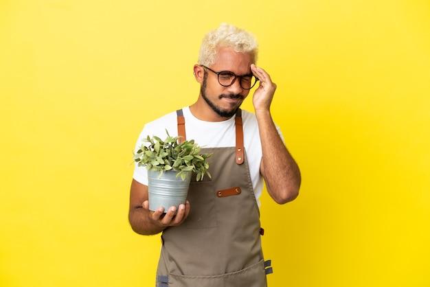 Giovane uomo colombiano che tiene una pianta isolata su sfondo giallo con mal di testa
