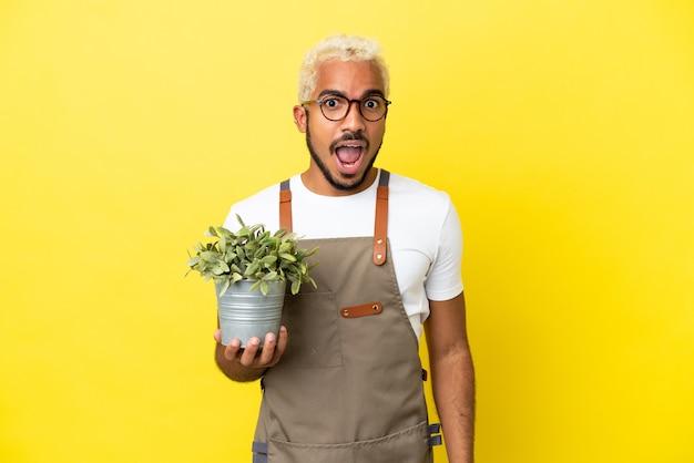 Giovane uomo colombiano che tiene una pianta isolata su sfondo giallo con espressione facciale a sorpresa