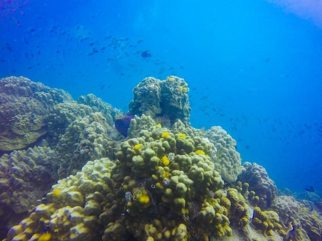Giovane formazione di barriera corallina sul fondale marino sabbioso. prospettiva prospettica del mare blu profondo con acqua pulita e luce solare. vita marina con animali e pianta. foto subacquea della barriera corallina in laguna tropicale blu