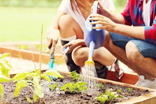Giovane coppia che pianta verdure ed erbe biologiche
