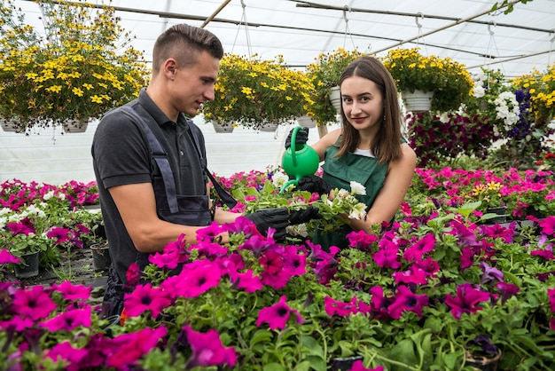Giovani coppie che prendono cura ogni giorno dei fiori che li innaffiano in una serra industriale per la vendita