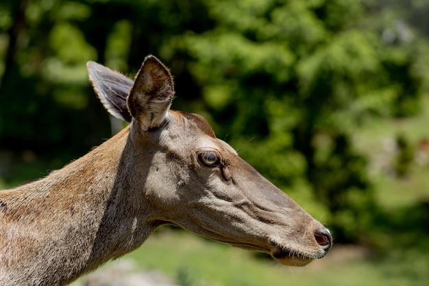 Ritratto di giovane cervo nella scena della natura