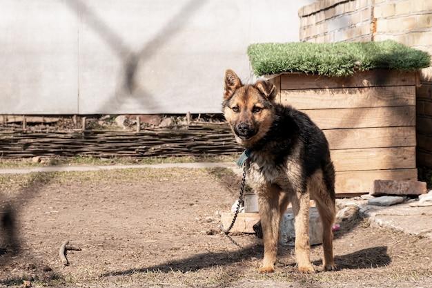 Un giovane cane su una catena vicino allo stand
