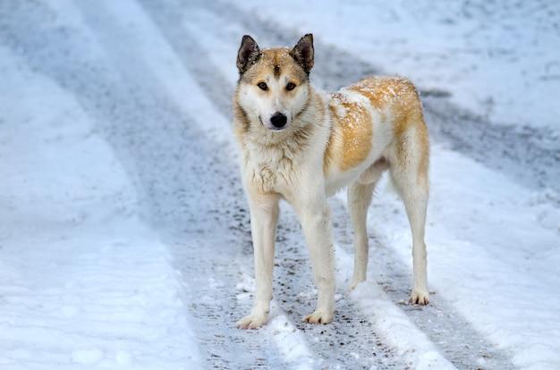 Giovane cane che cammina nella neve in inverno