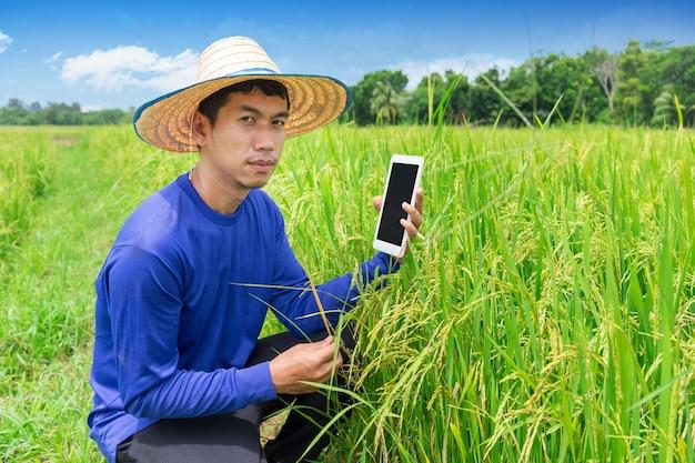 Compressa giovane dello smartphone della tenuta del coltivatore nel giacimento del riso. lavori agricoli stagionali