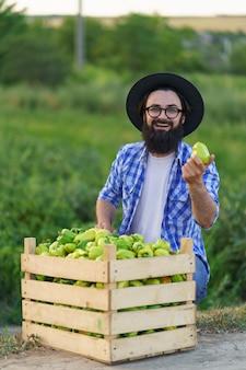 Il giovane contadino tiene tra le mani un peperone appena colto dal suo orto. concetto di agricoltura, prodotti biologici, alimentazione pulita, produzione ecologica. avvicinamento