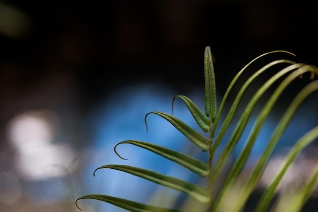 La giovane foglia di felce è un modello di felce verde pallido che cresce in una foresta all'inizio della primavera.