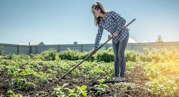 La giovane donna del giardiniere sta sarchiando le erbacce su una piantagione di patate con una zappa. concetto di giardinaggio, cura delle piante, coltivazione di verdure sane.