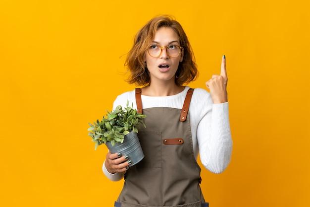 Giovane donna georgiana che tiene una pianta isolata sulla parete gialla che pensa un'idea che indica il dito verso l'alto