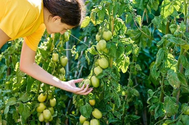 Ragazza che raccoglie pomodori, coltiva verdure ecologiche