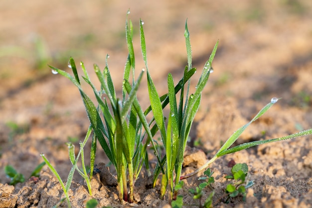 Giovani piante erbacee fotografate
