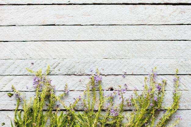 La lavanda viola dell'erba giovane si trova su un vecchio azzurro di legno