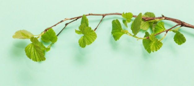 Giovani foglie verdi sui rami su fondo di carta