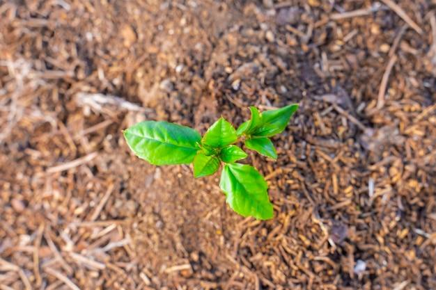 Giovane pianta verde che cresce su un giardino con la luce del sole