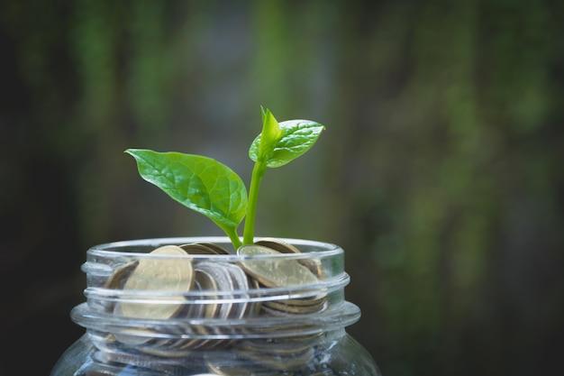 Giovane pianta verde con la moneta in barattolo per la crescita degli affari e il concetto finanziario.