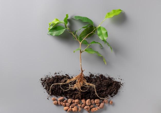Giovane pianta verde con terreno e drenaggio