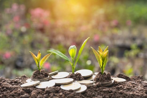 La giovane pianta verde con la moneta della pila su terra per la crescita del concetto finanziario di affari.