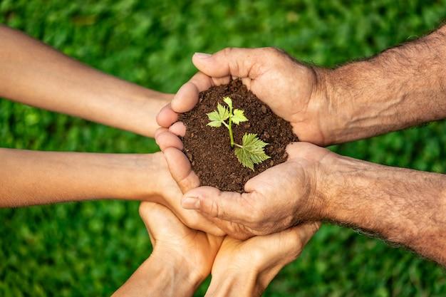 Giovane germoglio verde nelle mani contro sfondo sfocato