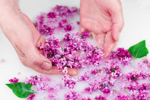 Le giovani mani tengono i petali lilla in un bagno di latte.