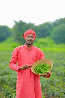 Giovane agricoltore indiano che raccoglie peperoncino verde nella ciotola di legno al campo freddo verde