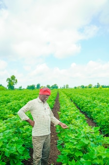 Giovane agricoltore indiano al campo di cotone, india