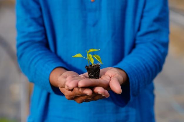 Giovane agricoltore indiano che tiene piccolo raccolto di peperoncino rosso in mano alla serra