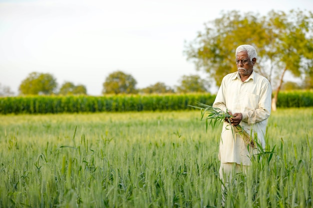 Giovane agricoltore indiano in piedi al campo di grano