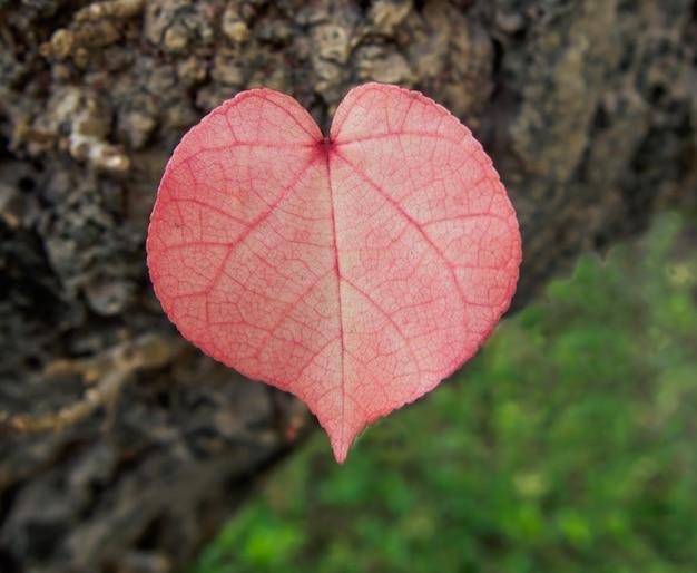 Giovani foglie di alberi