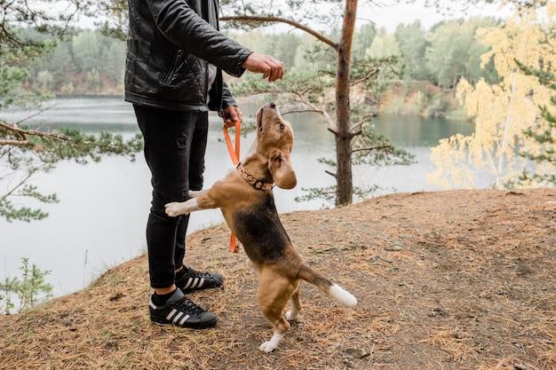 Giovane uomo in abbigliamento casual che gioca con il cucciolo di beagle divertente carino sul suolo della foresta dal lago durante il freddo