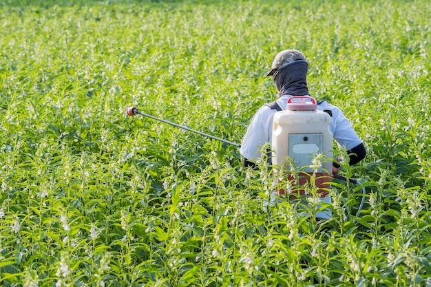 Un giovane agricoltore che spruzza pesticidi (prodotti chimici agricoli) sul proprio campo di sesamo