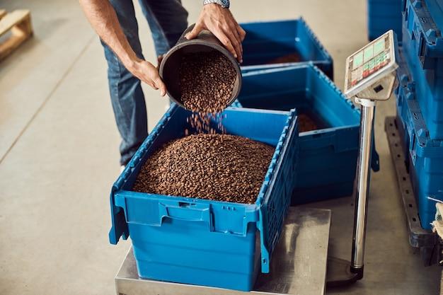 Giovane uomo che riempie la scatola di immagazzinaggio con fagioli arrostiti mentre si trova vicino alla bilancia in magazzino e misura il peso della materia prima raw