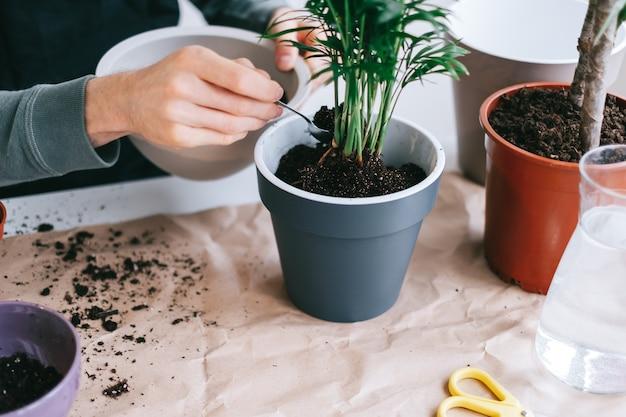 Giardiniere del giovane pianta di trapianto in vasi sul tavolo in legno bianco con carta