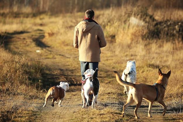 Giovane uomo a piedi con due cani sul soleggiato campo autunnale