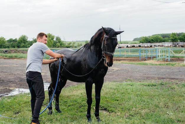 Un giovane uomo lava un cavallo purosangue con un tubo flessibile in una giornata estiva al ranch.