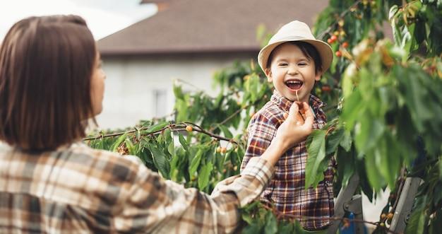 Giovane madre e suo figlio che mangiano le ciliege dall'albero usando una scala per alzarsi