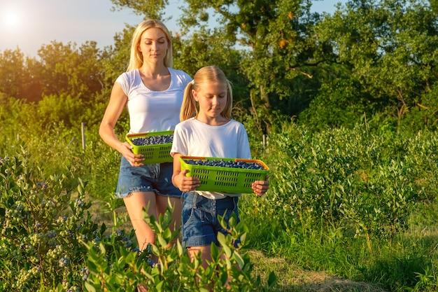 Giovane madre con sua figlia che raccolgono mirtilli in un'azienda agricola biologica