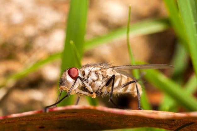 Giovane mosca appena nata della casa - bambino della mosca comune
