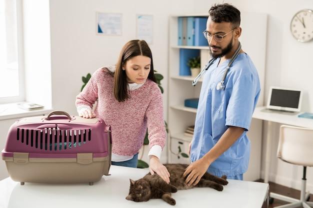 Giovane proprietario dell'animale domestico e del gatto commovente di medico veterinario professionista sulla tavola medica prima dell'esame dell'animale